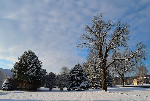 Snow, Trees, Morning, Winter, Landscape, Cold, Outdoor