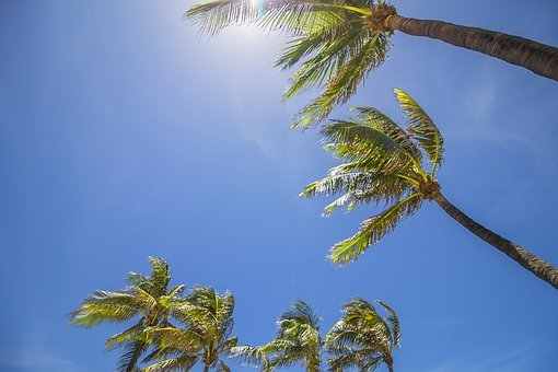 Miami, Palm Trees, Summer, Palm, Tropical, Beach, Tree
