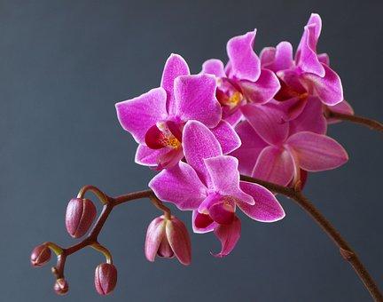 Orchid, Flower, Blossom, Bloom, Nature, Plant, Violet