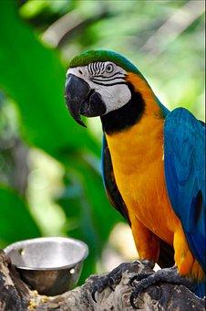 Parrot, Bird, Bright