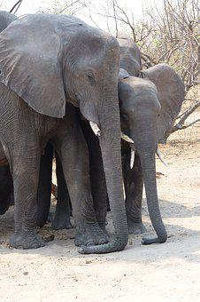 Elephant, Afternoon Rest, Family, Rest