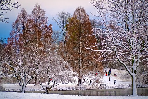 Winter, Snow, Wintry, Cold, White, Snowfall, Lake, Hill