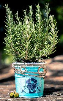 Rosemary, Vase, The Jar Of Rosemary, Sun