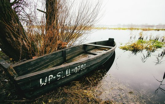 Boat, Swim, Lake, Swimming, Rushes, Water, Paddle