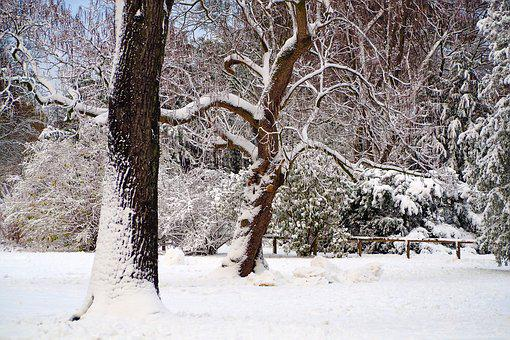 Winter, Snow, Wintry, Cold, White, Snowfall, Branches