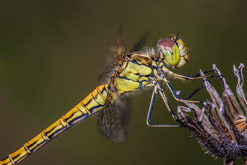 Dragonfly, Flower, Wing, Insect, Close