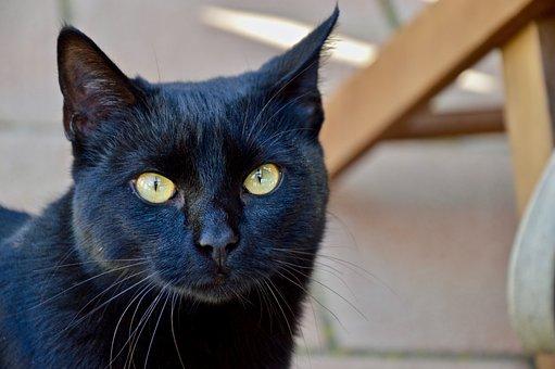 Animalia, Portrait, Nice, Cat, Black, Eyes, Animals