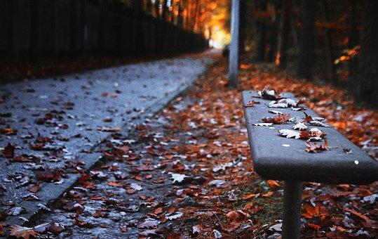 Bench, Autumn, The Path, Park, Leaf, Tree, Garden