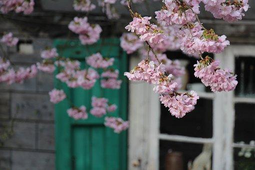 Truss, Flower, Plant, Nature, Bergisch Land, Küllenhahn