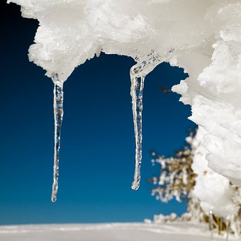 Icicle, Ice, Drip, Frozen, Icy, Cold, Winter, Tree