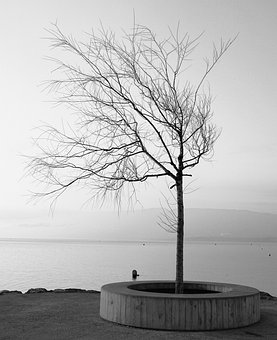 Tree, Landscape, Body Of Water, Lake, Winter, Water