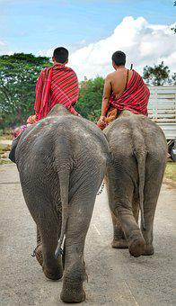 Thai, Elephants, Going, Home, Minders, People, Outdoors