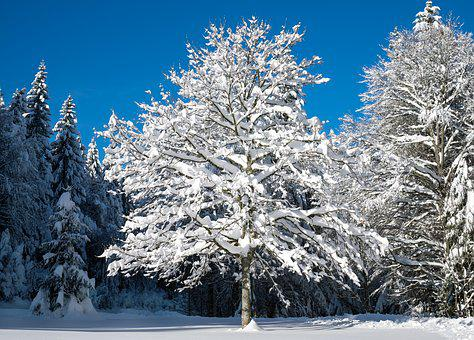 Tree, Winter, Snow Landscape, Young Tree, Snowy, Wintry