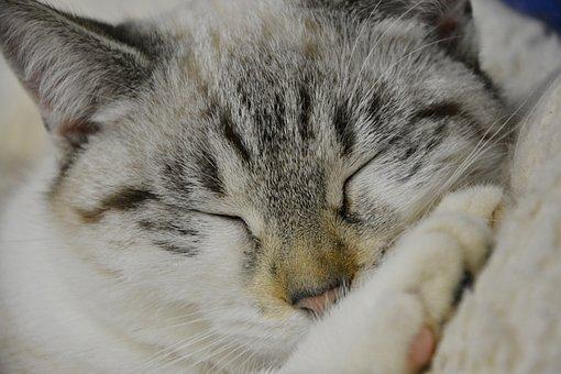 Cat Sleeping, Young Cat, Sleep, Cute, Animal, Mammal