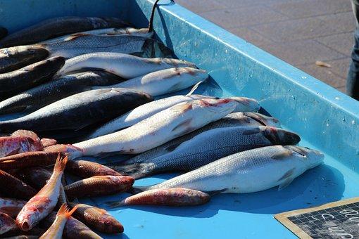 Fish, Fruits Of The Sea, No Person, Market, Sea