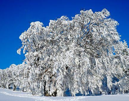 Wintry, Trees, Book, Snowy, Winter, Cold, Snow