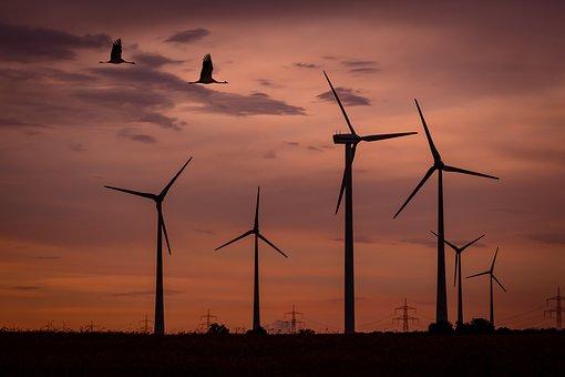Wind Park, Sunset, Birds, Wind Energy, Sky, Clouds