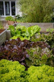 Urban Gardening, Locavore, Regional, Bio, Healthy