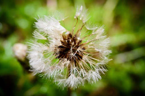 Macro Shooting, Flower Photo, Flowers, Plants