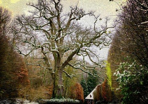 Tree, Wood, Old Tree, Winter, Kahl, Old, Gnarled