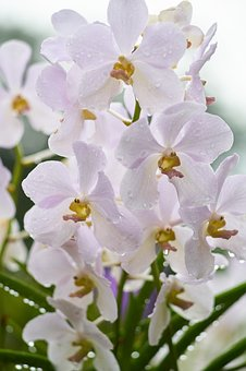 Flower, Orchid, Leaves, Nature, Spring, Beautiful