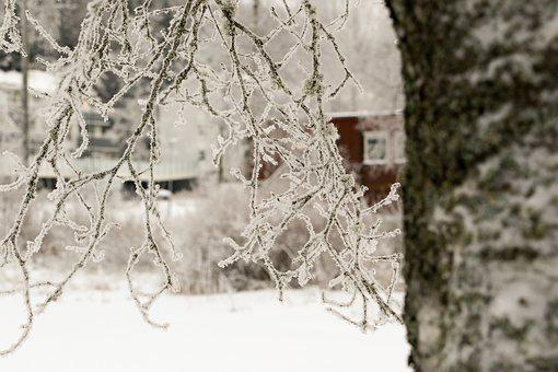 Winter, Tree, Snow, Old House, Frost
