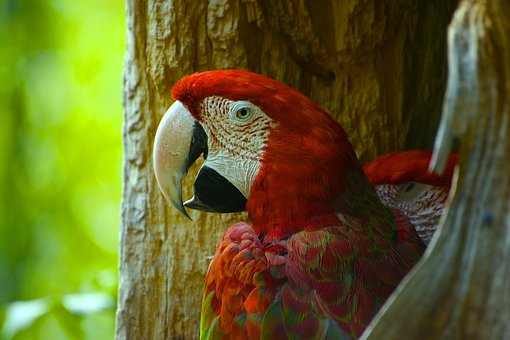 Bird, Nature, Animal World, Animal, Spring, Zoo, Parrot