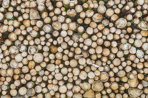 Structure, Texture, Background, Pattern, Wood, Abstract