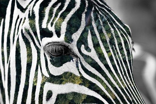 Forest, Zebra, Africa, Animal, African Animals, Look