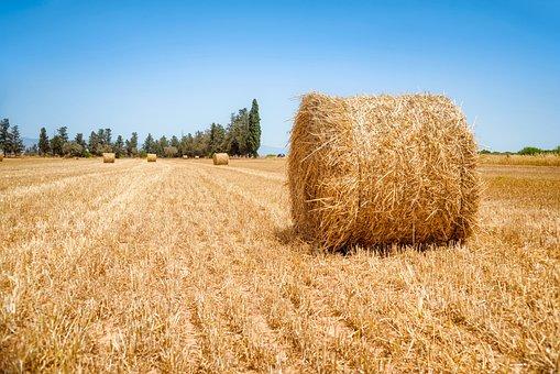 Bale, Blue Sky, Blue, Sky, Cloud, Countryside, Farm
