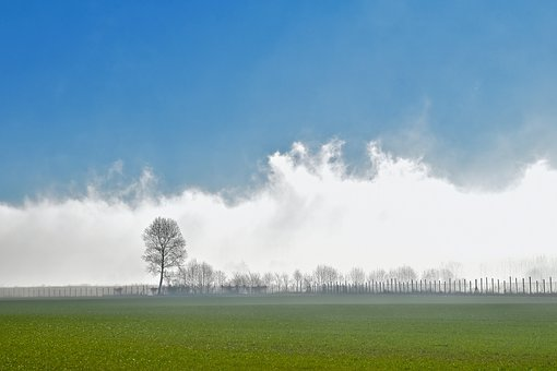 Landscape, Fog, Nature, Clouds, Sky, Trees, Plants