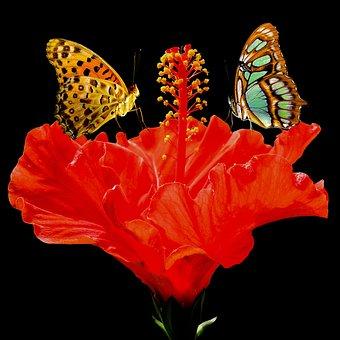 Nature, Animals, Flower, Blossom, Bloom, Hibiscus