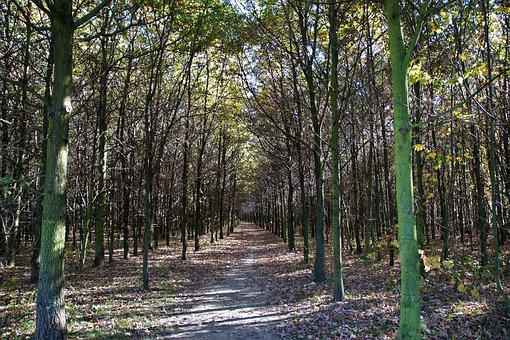 Autumn, Forest, Forest Road, Trees, Deciduous Tree