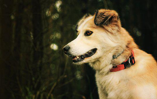 Dog, Friendship, Animal, A Friend Of Man, Animals, Pet
