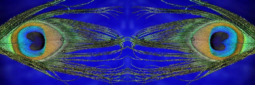 Peacock Feather, Mirrored, Macro, Panoramic Format