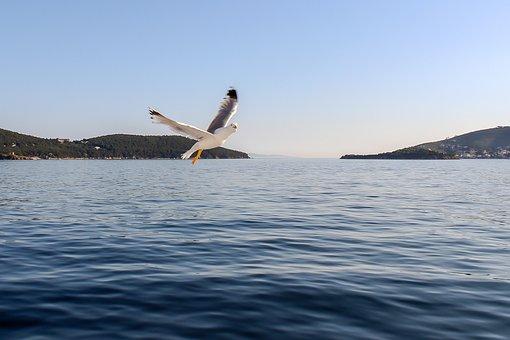 Seagull, Sea, Nature, Bird, Sky, Ocean, Water, Blue