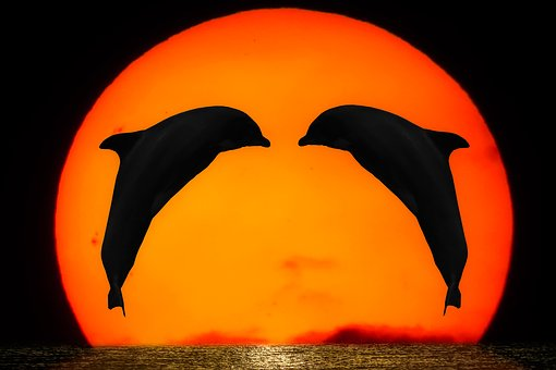Emotions, Nature, Animals, Dolphins, Sun, Sunset, Sea