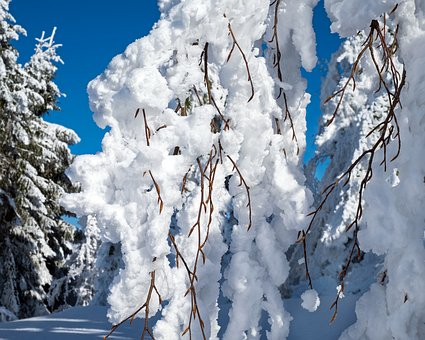 Winter, Branch, Branches, Snowy, Snow, Cold, Frost, Icy