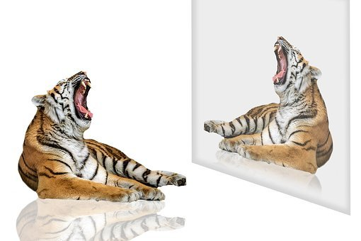 Tiger, Tiger Of Bengal, Animal, Feline, Tawny