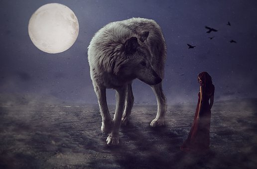 Wolf, Wolves, Mammal, Nature, Wildlife, Outdoors
