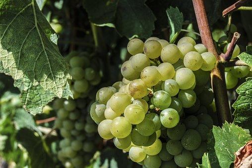 Fruit, Grapes, Creeper, Wine, Food, White Grape