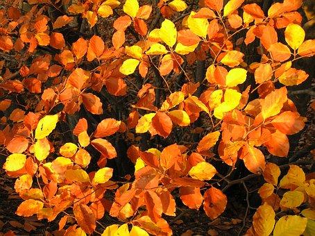 Leaves, Autumn, Colors, Foliage, Nature, Golden Autumn