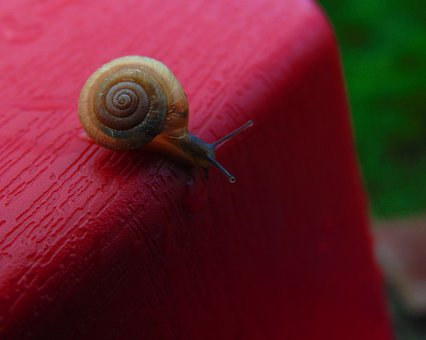 Insects, Snail, Shell, Rain, Garden, Animal, Nature