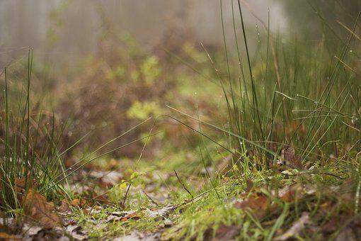 Grass, Reed, Dew, Bank