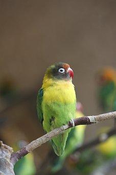 Bird, Animal World, Nature, Animal, Zoo, Roe Deer