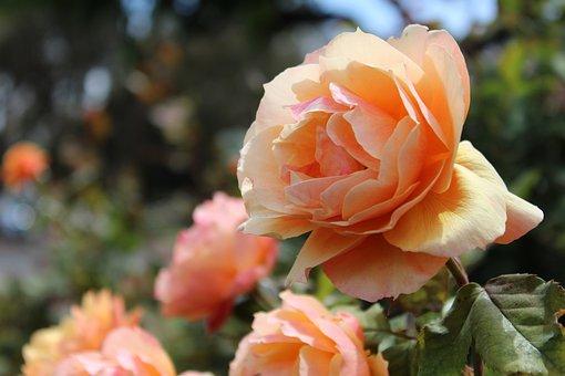 Flower, Bloom, Floral, Nature, Spring, Blossom, Summer