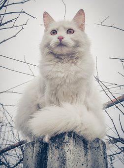 Cat, White Cat, Fur, Cute, Animal, Feline, Portrait
