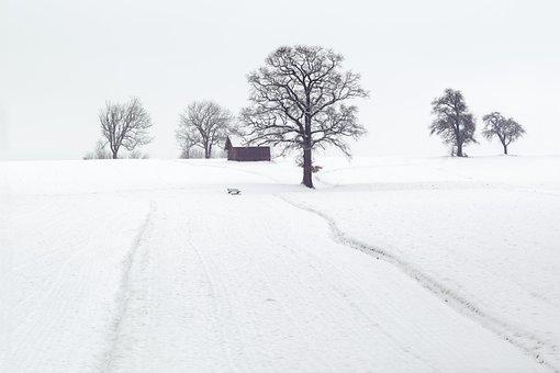 Winter, Winter Scene, Landscape, Wintry, Cold