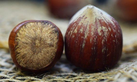 Shells, Nutshells, Brown, Healthy, About, Close, Nuts