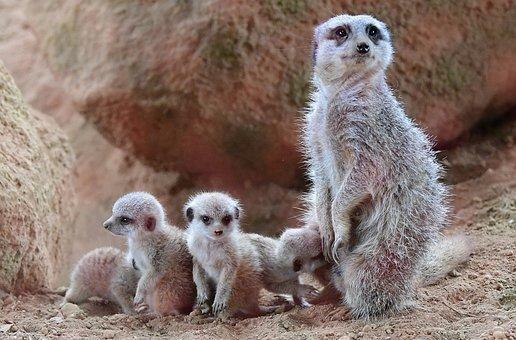 Nature, Fauna, Mammal, Cute, Animal, Cute Kitten